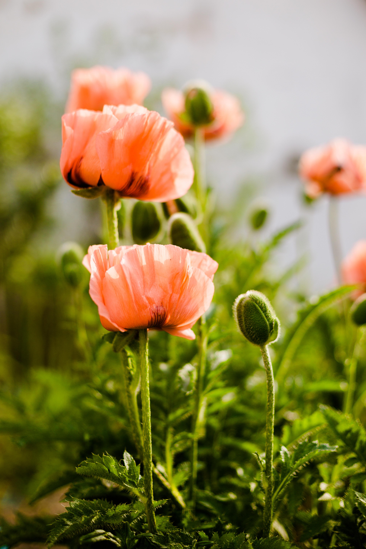Frühling am Gasthof Geyer